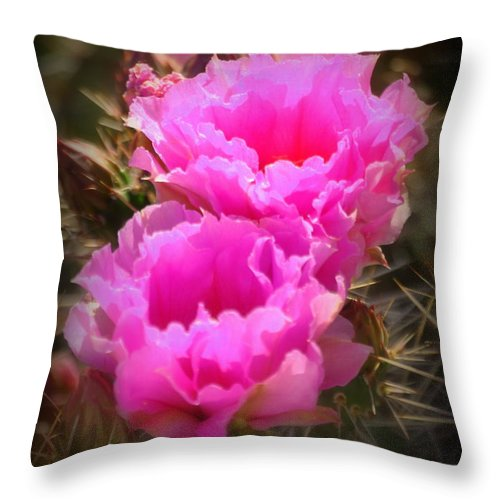 Cactus Throw Pillow featuring the photograph Cactus Flower Opuntia by Nathan Abbott