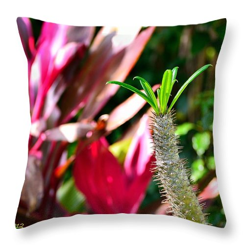 Cactus Throw Pillow featuring the photograph Cactus by Richard Zentner