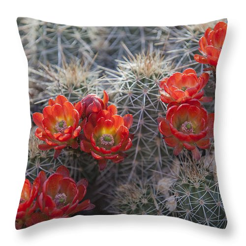 Flowers Throw Pillow featuring the photograph Cacus Blooms by Amber Kresge