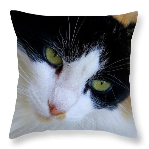 White Throw Pillow featuring the photograph Calico 1 by Mary Deal