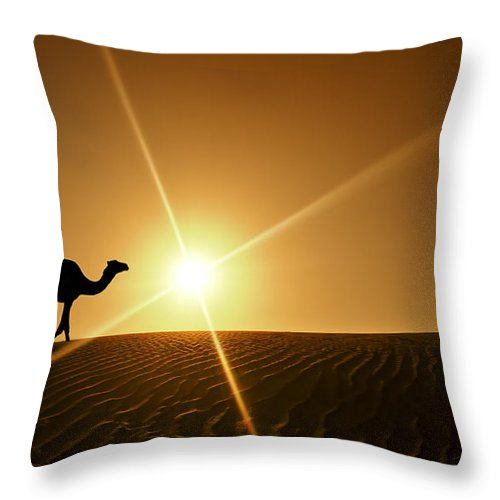Camel Silhouette In Dubai Desert Throw Pillow For Sale By Mq Naufal