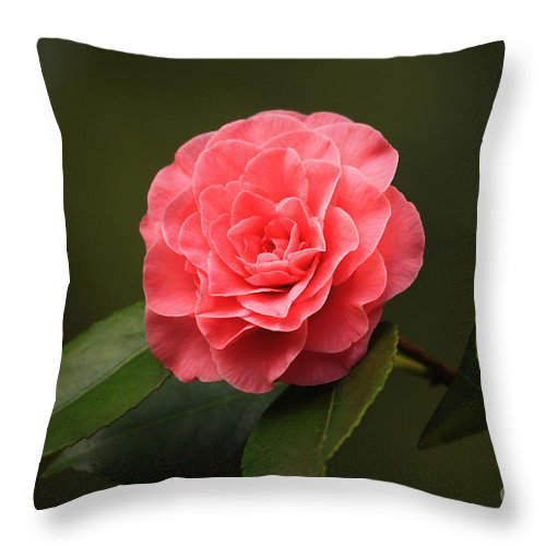 Flower Throw Pillow featuring the photograph Camellia by Winston Rockwell