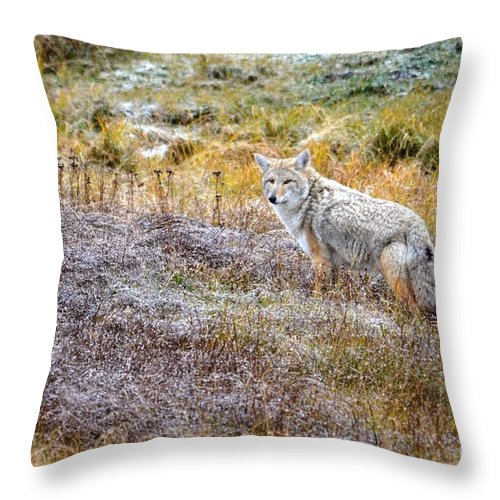 Coyote Throw Pillow featuring the photograph Camo Coyote by Deanna Cagle
