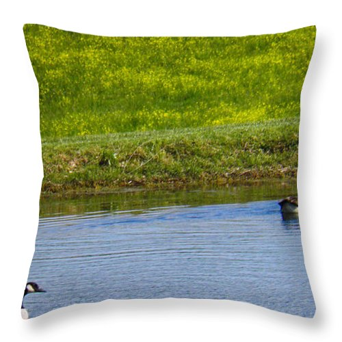 Geese Throw Pillow featuring the photograph Canada Geese And Goslings by Nick Kirby