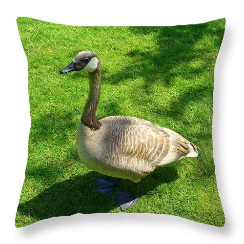 Goose Throw Pillow featuring the photograph Canada Goose by Lena Photo Art