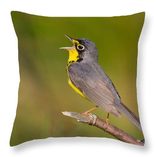 Fauna Throw Pillow featuring the photograph Canada Warbler by Jim Zipp