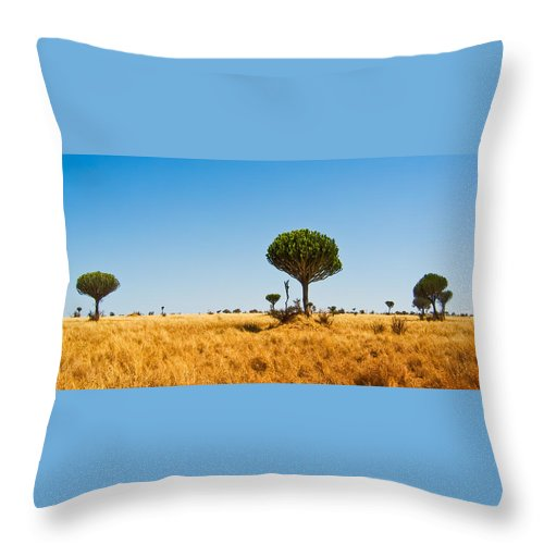 3scape Photos Throw Pillow featuring the photograph Candelabra Trees by Adam Romanowicz