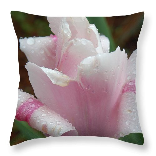 Pink Tulip Throw Pillow featuring the photograph Candy Striper by Suzanne Gaff