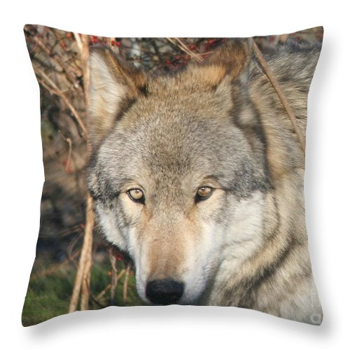 Wolf Throw Pillow featuring the photograph Canis Lupus by Neal Eslinger