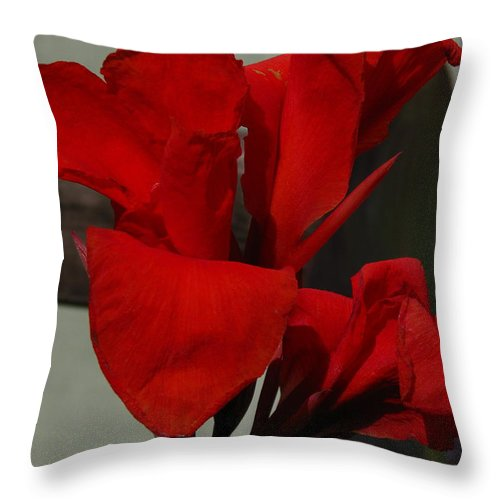 Patzer Throw Pillow featuring the photograph Canna by Greg Patzer