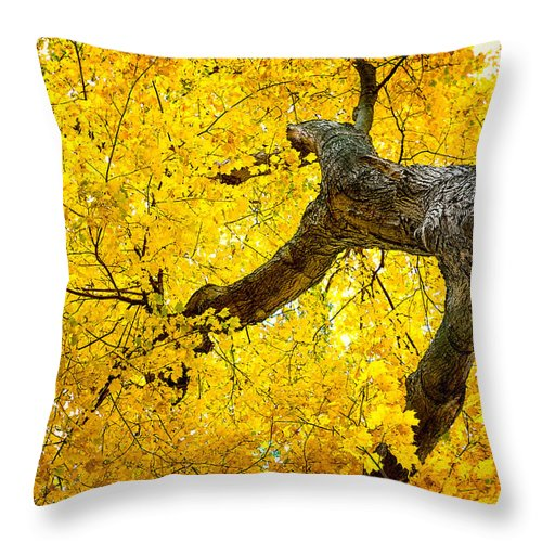 Abstract Throw Pillow featuring the photograph Canopy Of Autumn Leaves by Tom Mc Nemar