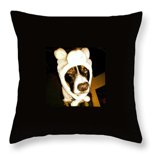 Beautiful Throw Pillow featuring the photograph Dog in a hat by Meg McG