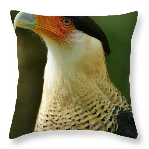 Dodsworth Throw Pillow featuring the photograph Caracara by Bill Dodsworth