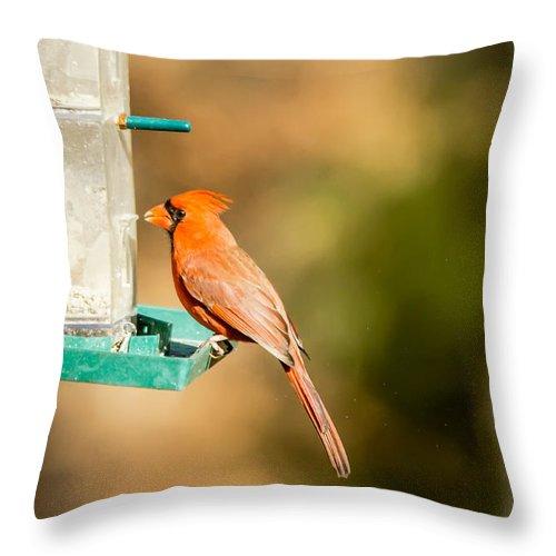 Bird Throw Pillow featuring the photograph Cardinal Bird At Bird-feeder by Alex Grichenko