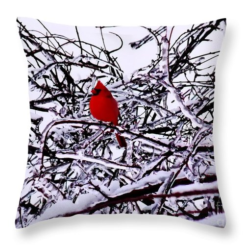 Irfan Collection Throw Pillow featuring the photograph Cardinal by Irfan Gillani