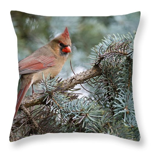 Cardinal Throw Pillow featuring the photograph Cardinal Pictures 69 by World Wildlife Photography
