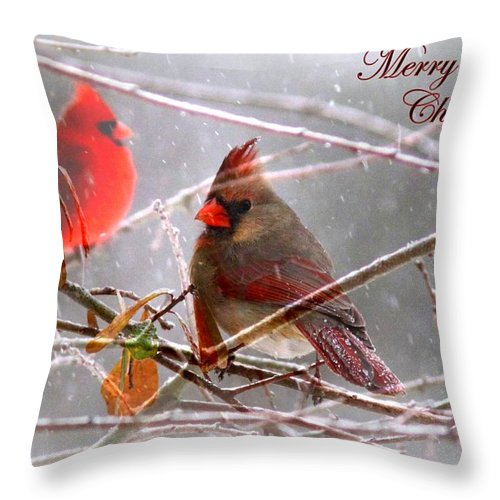 Cardinal Throw Pillow featuring the photograph Cardinals - Male And Female - Img_003card by Travis Truelove