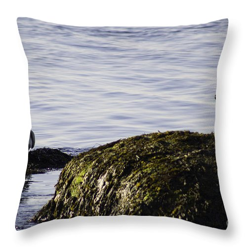 Seal Throw Pillow featuring the photograph Care To Share? by Joe Geraci
