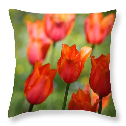 Tulips Throw Pillow featuring the photograph Caressed By The Wind by The Art Of Marilyn Ridoutt-Greene