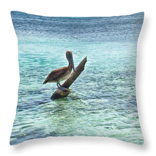 Bird Print Throw Pillow featuring the photograph Caribbean Pelican I by Kristina Deane