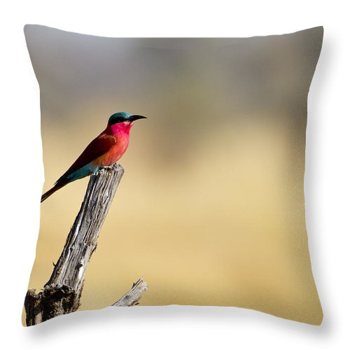 Carmine Throw Pillow featuring the photograph Carmine Bee Eater 2 by Russell Millner