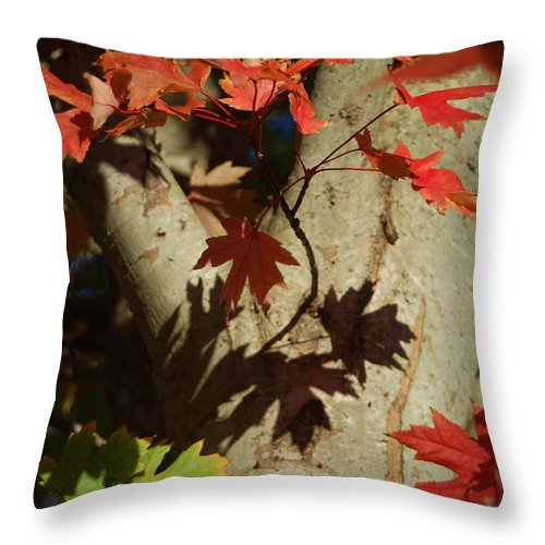 Autumn Throw Pillow featuring the photograph Carolina Autumn by Suzanne Gaff