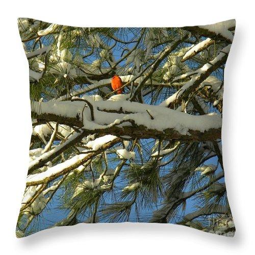 Christmas Card Throw Pillow featuring the digital art Carolina Cardinal by Matthew Seufer
