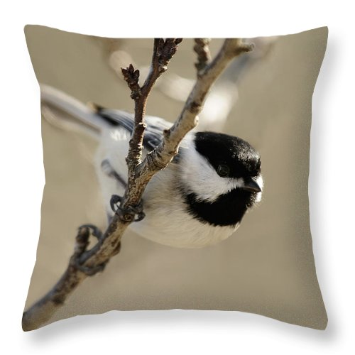 Chickadee Throw Pillow featuring the photograph Carolina Chickadees by Lara Ellis