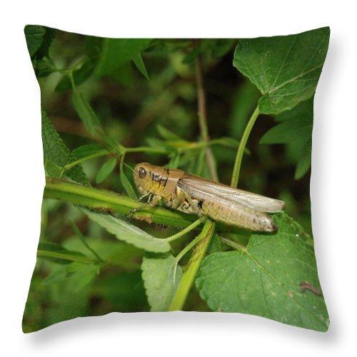 Carolina Locust Throw Pillow featuring the digital art Carolina Locust by Eva Kaufman
