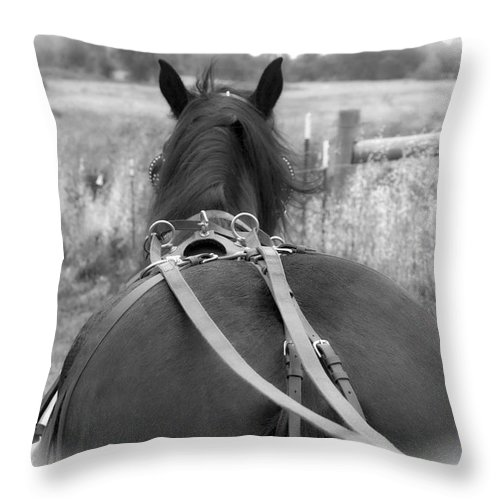 Animal Throw Pillow featuring the photograph Carraige View Horse by William Havle