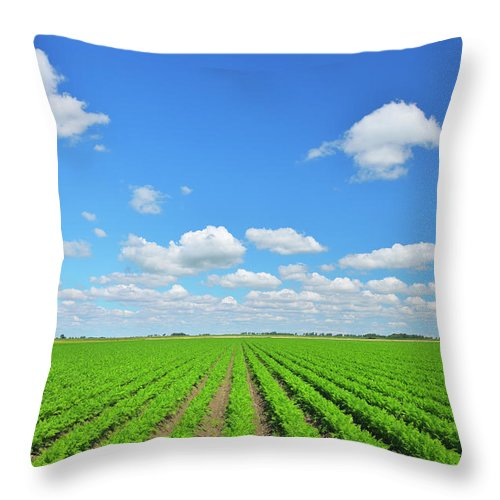 Tranquility Throw Pillow featuring the photograph Carrot Field by Raimund Linke