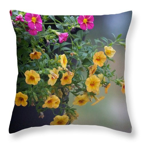 Petunia Throw Pillow featuring the photograph Cascade Of Color by June Hatleberg Photography