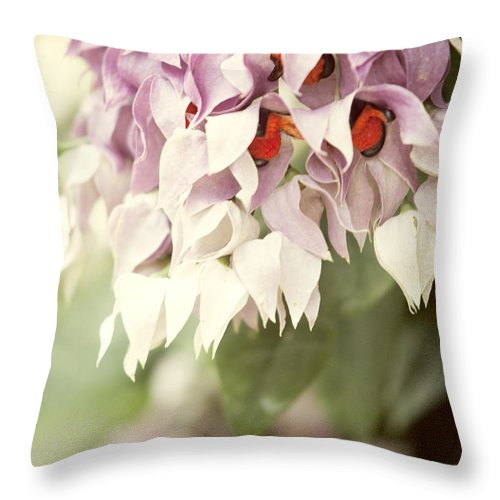 Beauty In Nature Throw Pillow featuring the photograph Cascade Of Flower by Juli Scalzi