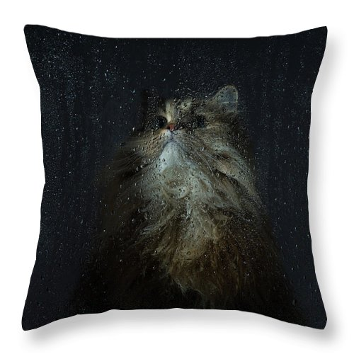 Pets Throw Pillow featuring the photograph Cat By Rainy Window by Benjamin Torode