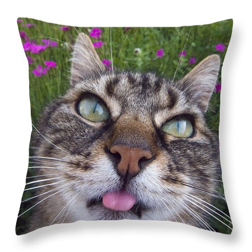Cat Throw Pillow featuring the photograph Cat Face by Jean-Louis Klein and Marie-Luce Hubert