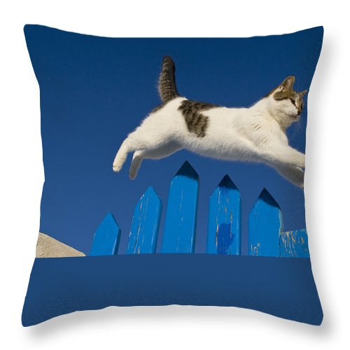 Cat Throw Pillow featuring the photograph Cat Jumping A Gate by Jean-Louis Klein and Marie-Luce Hubert