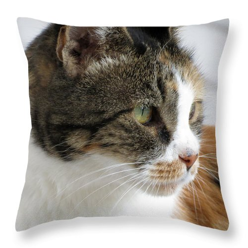 Cat Throw Pillow featuring the photograph Cat by Laurel Powell