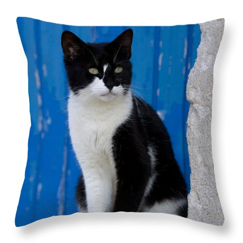 Cat Throw Pillow featuring the photograph Cat On A Greek Island by Jean-Louis Klein and Marie-Luce Hubert