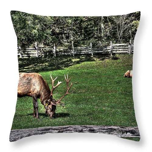 Cataloochee Throw Pillow featuring the photograph Cataloochee Bull Session by Craig Burgwardt