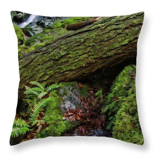 Cataracts Canyon Throw Pillow featuring the photograph Cataracts Canyon Log And Streem by Blake Richards
