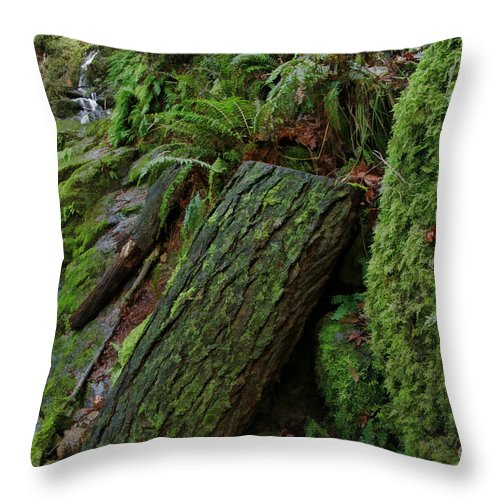 Throw Pillow featuring the photograph Cataracts Canyon Mossy Log by Blake Richards
