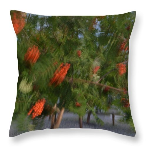 Wind Throw Pillow featuring the photograph Catch The Wind by Brian Boyle