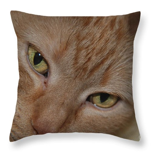 Orange Throw Pillow featuring the photograph Cat's Eyes by Mark McReynolds