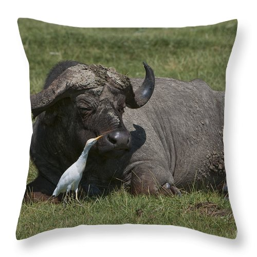 Africa Throw Pillow featuring the photograph Cattle Egret With Cape Buffalo by John Shaw