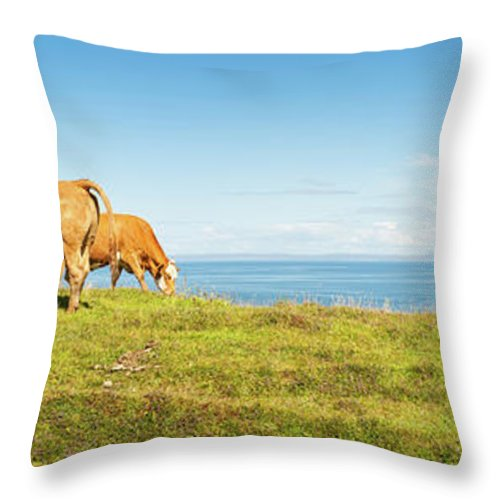 Water's Edge Throw Pillow featuring the photograph Cattle Grazing In Picturesque Meadow by Fotovoyager