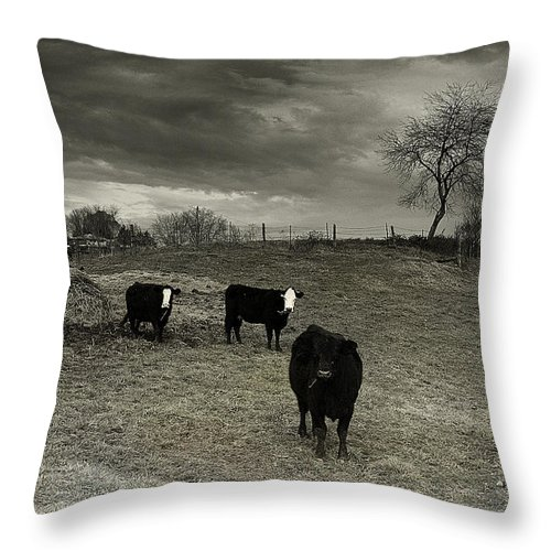 Animals Throw Pillow featuring the photograph Cattle In The Winter Pasture Series Image 2 by Gray Artus