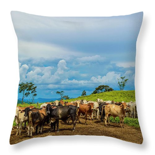 Grass Throw Pillow featuring the photograph Cattle by Kcris Ramos