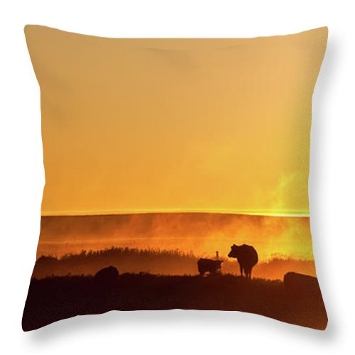 Scenics Throw Pillow featuring the photograph Cattle Silhouette Panorama by Imaginegolf