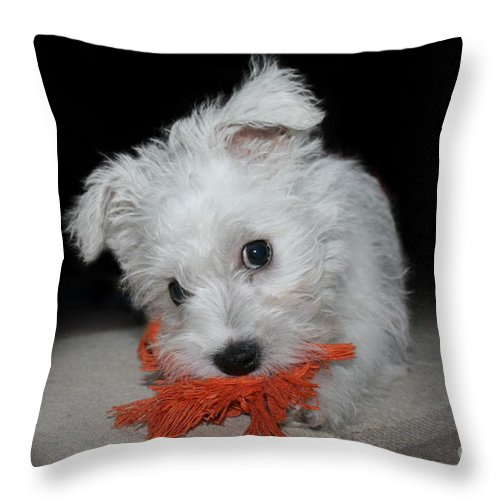 Puppy Throw Pillow featuring the photograph Caught In The Act by Terri Waters