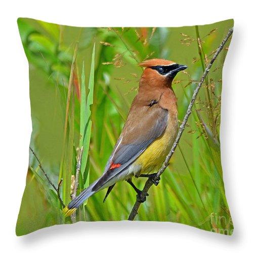 Bird Throw Pillow featuring the photograph Cedar Waxwing by Rodney Campbell